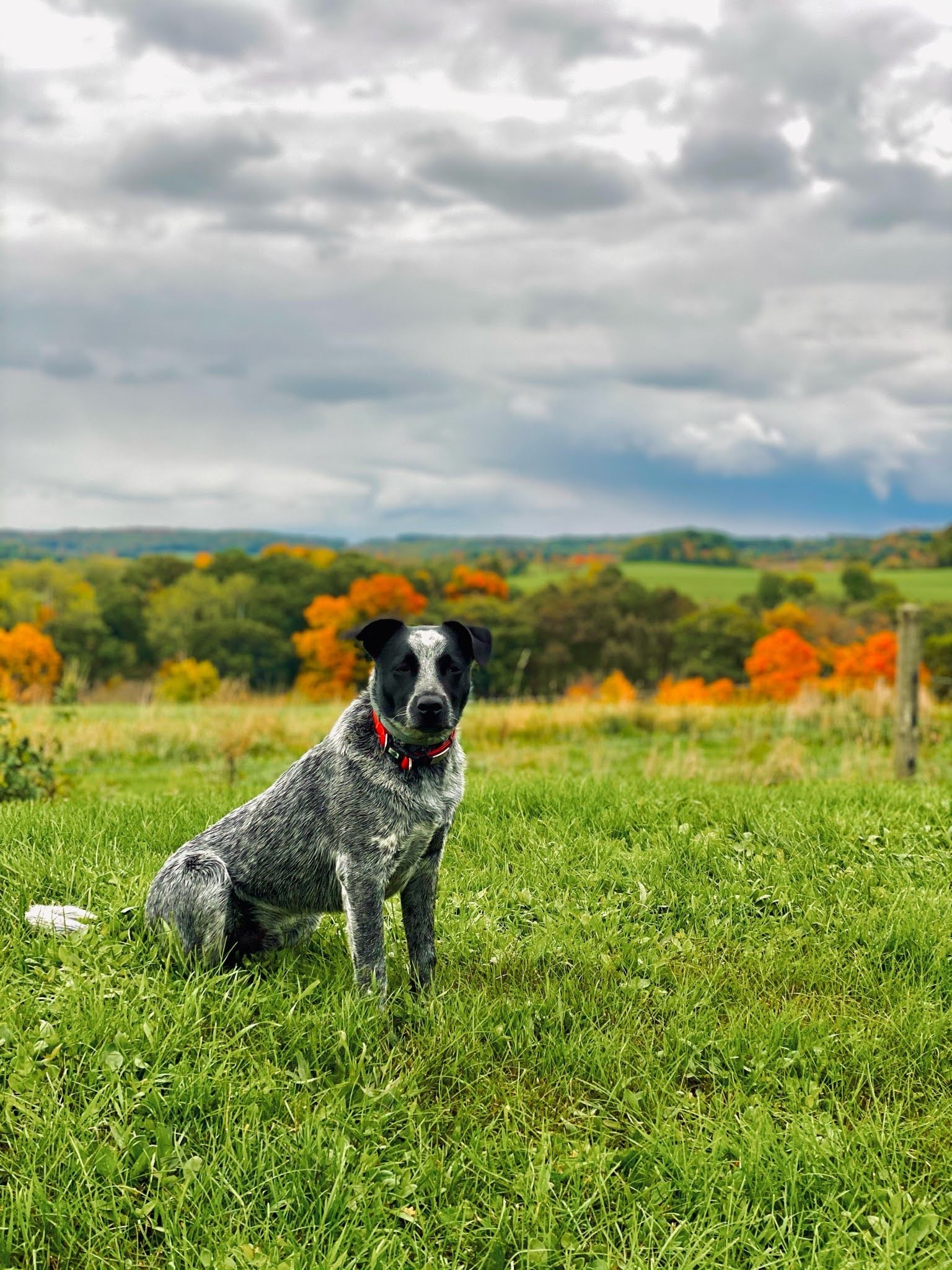 Sunrise Veterinary Services - Reedsburg, WI. | IMG 4181