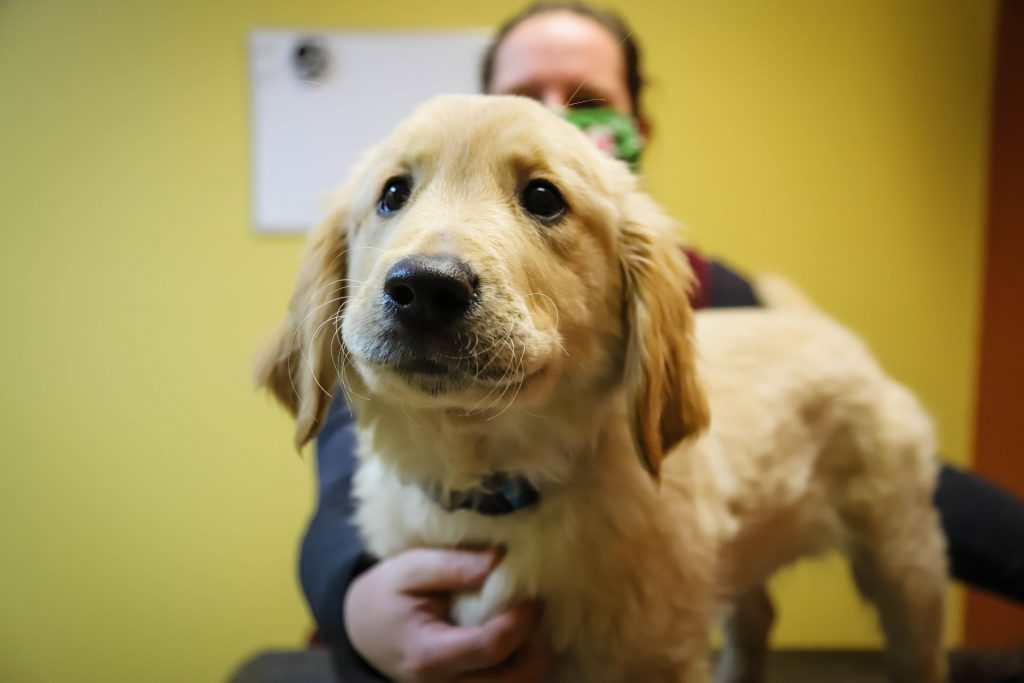 Sunrise Veterinary Services - Reedsburg, WI. | new puppy information