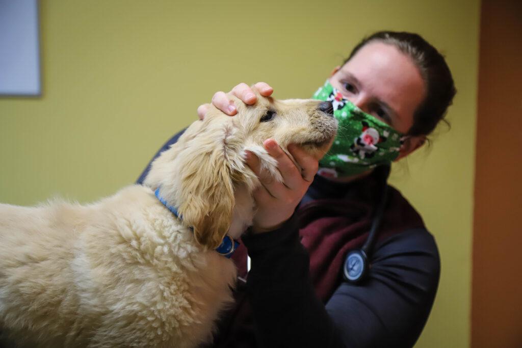 Sunrise Veterinary Services - Reedsburg, WI. | IMG 7438